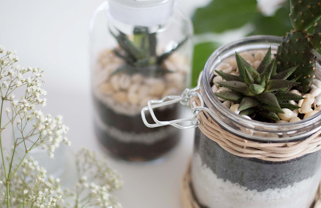 un terrarium cactus les brindilles inspirations d co pour nid douillet. Black Bedroom Furniture Sets. Home Design Ideas