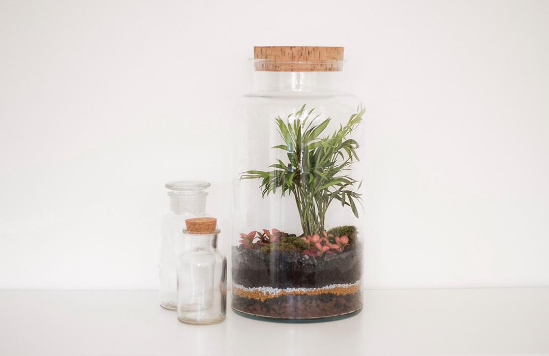 un terrarium tropical composer soi m me les brindilles diy et d co. Black Bedroom Furniture Sets. Home Design Ideas