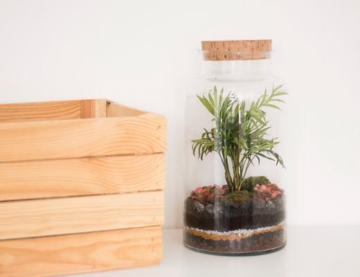 terrarium-tropical-atelier-microcosme
